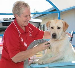 aussie pooch mobile case study Aussie pooch mobile the dog wash that comes to you the story of  case summary year 2 dog grooming core service supplementary services hydrobath toys & treats.